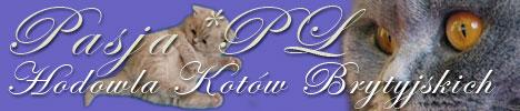 Hodowla kotów brytyjskich Pasja*PL